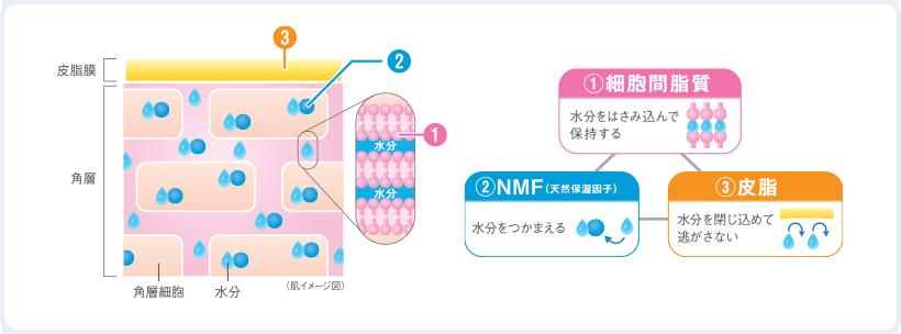 バリア機能3因子
